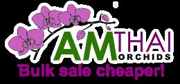 AmThai Orchids Online